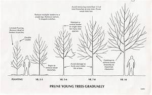 Diagram  Tree Pruning Diagram