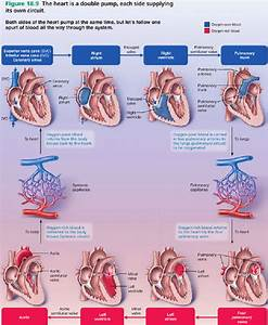 Pin On Cardiology