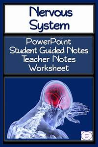 Nervous System Powerpoint  Student Guided Notes  And