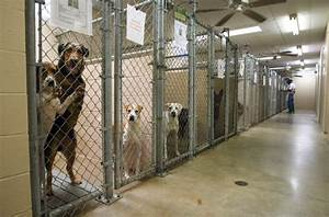 A Letter from a Shelter Manager | No Dog About It Blog