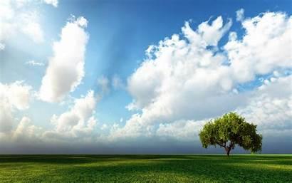 Sky Tree Wallpapers Resolution Background Pixelstalk Res