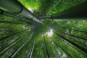 Wie Schnell Wächst Bambus : kologische nachhaltigkeit mit bambus esanitas der gesundheitsblog ~ Frokenaadalensverden.com Haus und Dekorationen