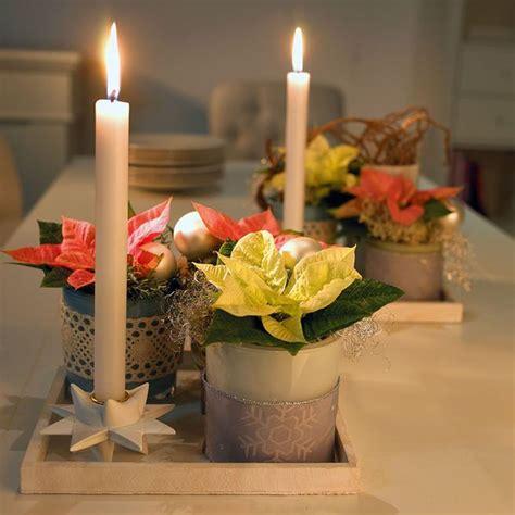 weihnachtsstern pflanze deko poinsettien dekorieren f 252 r die weihnachtszeit x