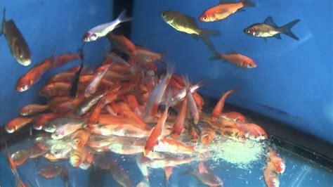 Petition · Walmart: Stop The Walmart Fish Abuse · Change.org
