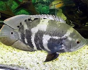 Aquarium Type: