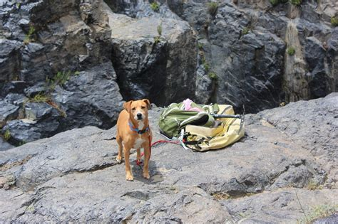 complete guide    dog camping dogvills