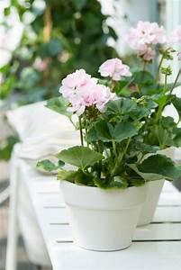 Blühende Zimmerpflanzen Pflegeleicht : diese zimmerpflanzen sind schattig und pflegeleicht ~ Michelbontemps.com Haus und Dekorationen