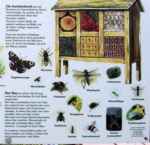 Tiere Im Insektenhotel : streuobstwiesen biotop ute42 39 s blog ~ Whattoseeinmadrid.com Haus und Dekorationen