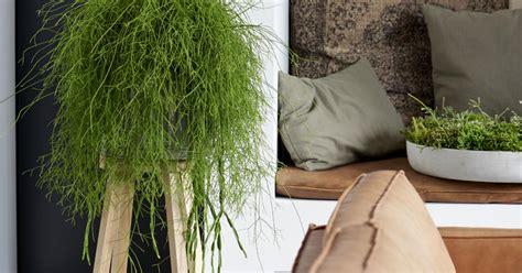 Wohnzimmer Geeignet by Die Sch 246 Nsten H 228 Ngepflanzen F 252 Rs Zimmer Mein Sch 246 Ner Garten