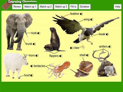Animal Body Parts Ii Englishguideorg