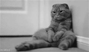 sleepy kitten grumpy cat gif | WiffleGif