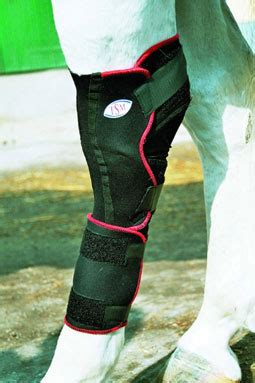 tsm vet reha pferd bandage fuer sprunggelenk links lange