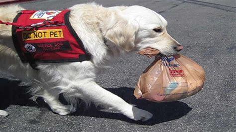interacting     service animals axcess news
