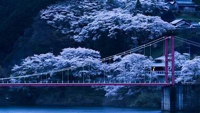 Sakura Wallpapers Japan Trees