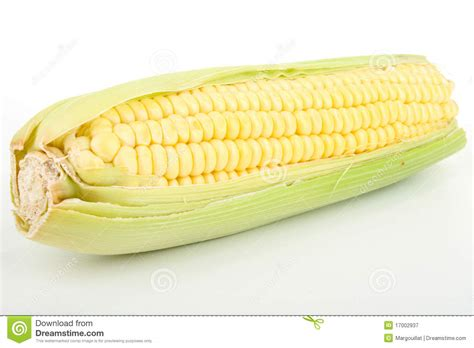 ear  corn stock image image  vegetable white