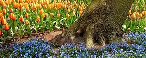 Blumenzwiebeln Richtig Setzen : blumenzwiebeln setzen die parzelle ~ Lizthompson.info Haus und Dekorationen