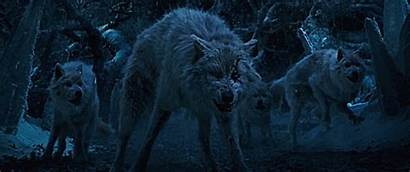 Beast Beauty Wolf Growl Adam Prince Ineffable