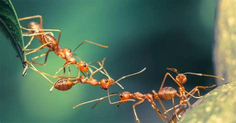 Ameisen  Blattläuse, Vertreiben Und Tipps  Mein Schöner