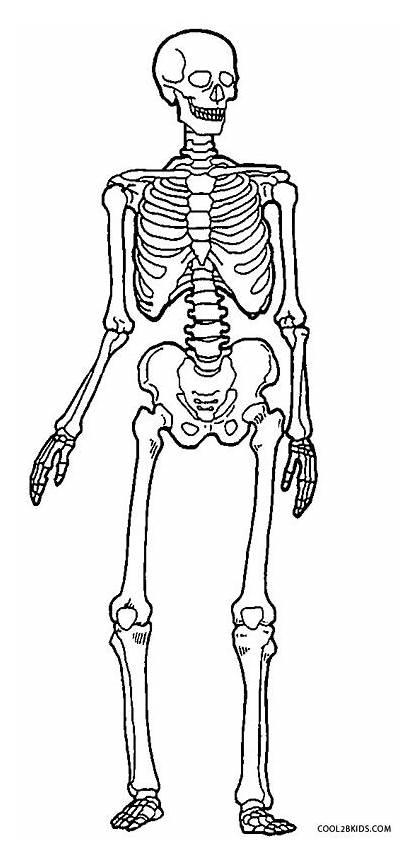 Skeleton Coloring Human Printable Drawing Anatomy Cool2bkids