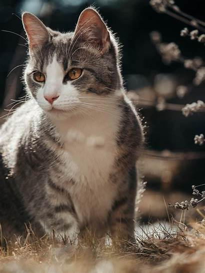 Cat Cute Kitty Unsplash Comments 1000