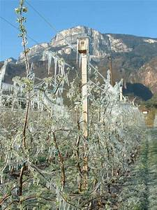 Wieviel Frost Verträgt Die Obstblüte : frostbew sserung ~ Frokenaadalensverden.com Haus und Dekorationen