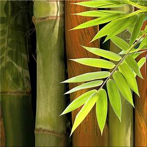 Bamboo: Grow Bamboo Indoors – the popular easy to care for ...
