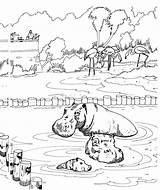 Coloring Pages Hippo Animals Hippos Wildlife Zoo Wallowing sketch template