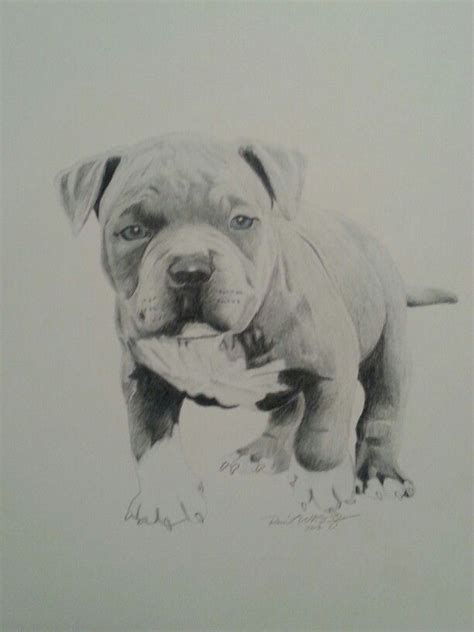 baby pitbull drawing  reco washington art drawings