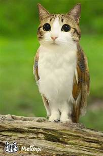 owl cat meowls are cat heads photoshopped onto owl bodies