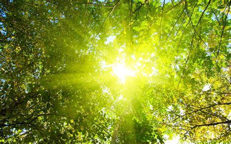 Sunshine Wallpaper Treetop Hd Desktop Wallpapers 4k Hd