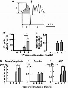Effects Of Intraluminal Pressure Stimulation On