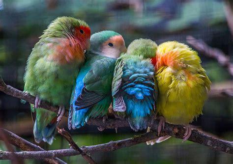 aussi sublimes que solidaires ces adorables oiseaux se blottissent les uns contre les autres