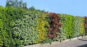 Arbustes Décoratifs à Fleurs : haies vives le cadre de votre vie au pied de mon arbre ~ Premium-room.com Idées de Décoration