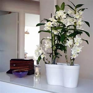 Rempoter Une Orchidee : 1000 ideas about entretien des orchid es on pinterest ~ Mglfilm.com Idées de Décoration