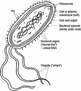 study help biology and study on pinterest With structure of cell part 3 pass science solutions