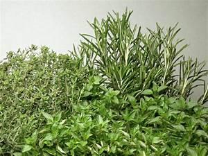 Lavendel Vermehren Wasserglas : gartentipps das ist im juli zu tun ~ Lizthompson.info Haus und Dekorationen