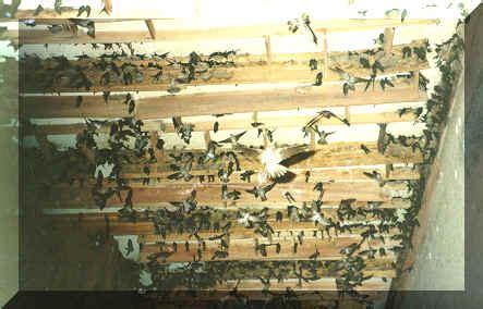 gambar rumah walet  kayu gambar puasa