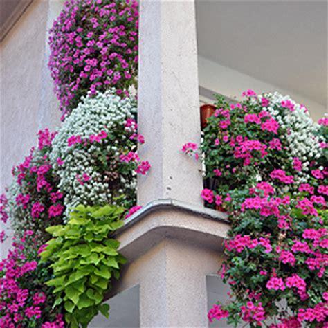 Blumen Für Balkon Winterhart by Balkonpflanzen Pflanzen Auf Dem Balkon Standort Sonne