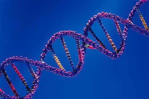 test genetica 233 tica