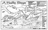 Coloring Stream Sheets Drawing Watershed Colouring Healthy Sheet Habitat Streamkeepers Sream Getdrawings Program Getcolorings Placemats Module 93kb 350px sketch template