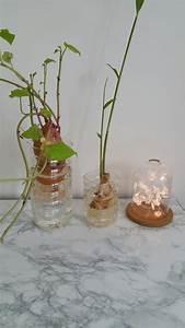 Patate Douce Plante : les petites m ma patate douce transform e en plante verte ~ Dode.kayakingforconservation.com Idées de Décoration