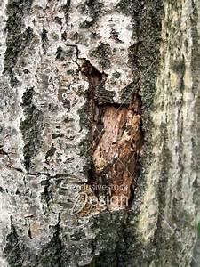 Achat Tronc Arbre Decoratif : banque d 39 image tronc d 39 arbre corce partiellement ~ Zukunftsfamilie.com Idées de Décoration