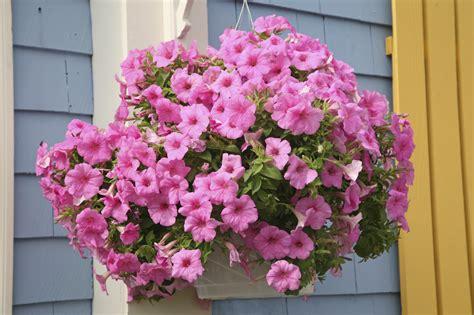 Hängende Blumen Balkon by Pflanzen Auf Balkon Terrasse