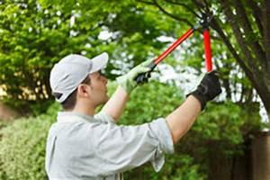 Bäume Beschneiden Jahreszeit : gartenarbeit im juni 10 wichtige aufgaben ~ Yasmunasinghe.com Haus und Dekorationen