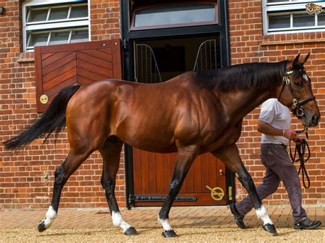 most horses expensive ever sold horse cost money pets4homes frankel