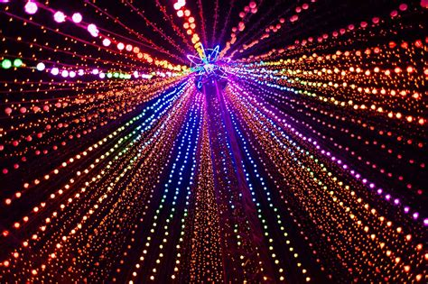 the german and the fibre optic tree phillip wong