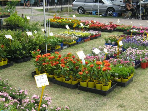 best plant nurseries where to buy plants and pots on the sunshine coast sunshine coast