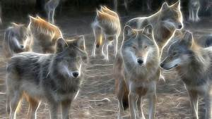 Hd cool animated wolf pictures