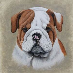 Dog portraits in oil | Thoroughbredfineart
