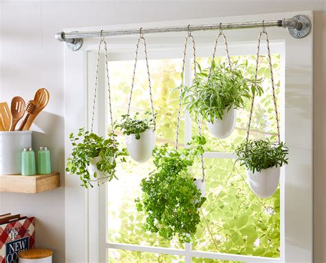 Window Sill Plant Holder by How To Grow Hanging Tomato Plants Better Homes Gardens